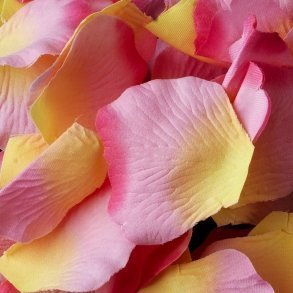 Pink & Yellow Silk Rose Petals - 100 Petals