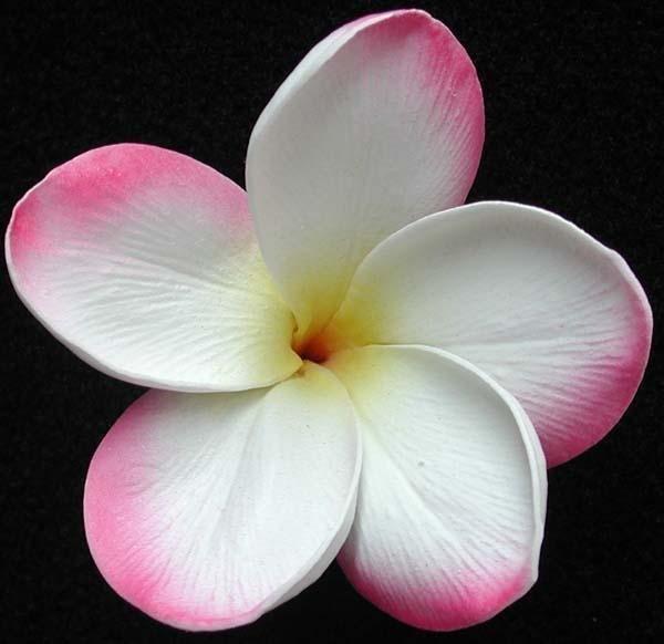 Pink White Frangipani Bouquet