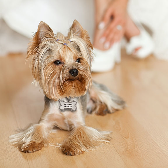 Dog Of Honor Wedding Collar Charm